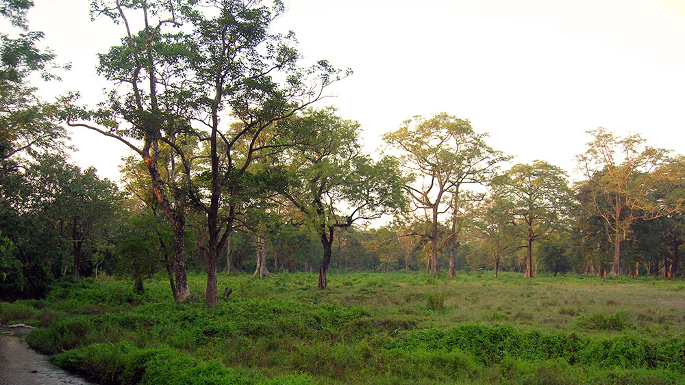 Jaldapara Evening